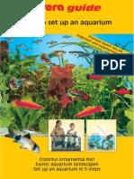 How to Set Up an Aquarium