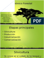 TALLER # 4Ciclo Económico Forestal (1)