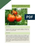 El Tomate Es Una Planta Muy Recomendada Para Todo Tipo de Huerto