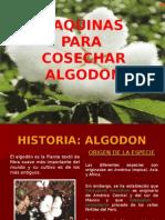 Historia Algodon(Clase3)