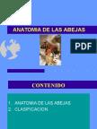 Clase2-Anatomia.ppt
