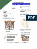 Anatoma Del Aparato Respiratorio repaso para examen de essalud