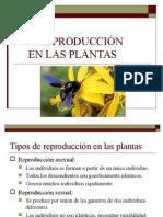12_reproduccion_plantas.ppt