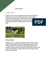 Artikel Toraja