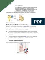 Articulaciones cartilaginosas.docx