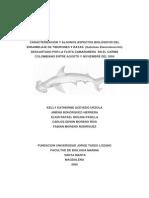 bycatch tiburones y rayas
