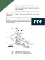 Monitoreo de Plantas, Indices de Biodiversidad Alfa Beta y Gamma, Marco Teorico