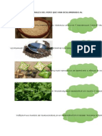 Productos Naturales Del Perú Que Han Deslumbrado Al Mundo