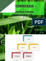 Clase 1 Fotosíntesis (Parte 1)