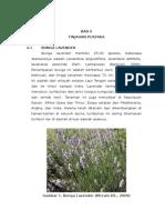 BAB II Terapi Lavender
