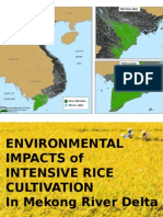 Intensive Rice Production