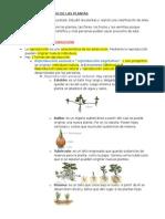 Las Flores y El Estudio de Las Plantas