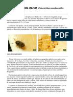 Barrenillo.pdf