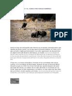 El Niño, El Buitre y El Cerdo