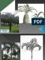 árboles tipos