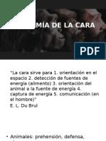 ANATOMÍA DE LA CARA.pptx