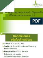 manejoagronomico-121101184345-phpapp02