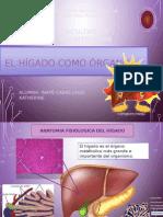 Fisiologia Del Hígado