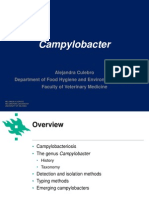 Lecture 2 Campylobateria