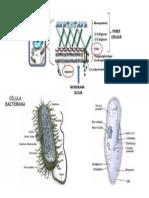 Tipos de célula