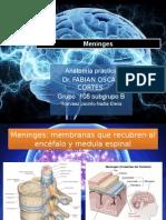 Meninges encefalo y medula espinal