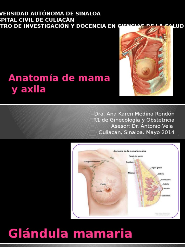 Anatomía de Mama y Axila