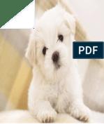 cãozinho branquinho