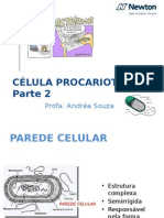 Celula Procariota Estrutura