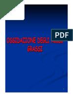 16 Ossidazione Acidi Grassi