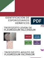 Identificación de Esporozoarios Hemáticos