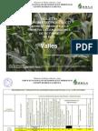 BOLETÍN AGROMETEOROLOGICO correspondiente a la primera decena del mes de octubre .pdf