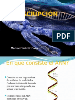 Transcripcion Del Adn