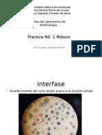 Practica N01 Mitosis