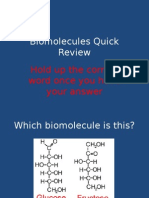 biomolecules quick review - bellringer