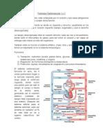 Fisiología Cardiovascular 1 y 2