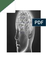Sistema Neurologíco
