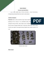 Daun Sirsak Paper 2