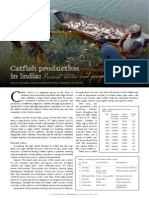 Catfish production in India
