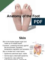Anatomy Foot