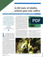 Resistencia Del Maíz Al Taladro