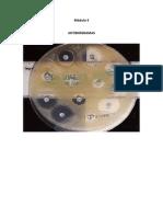 protocolo antibiogramas