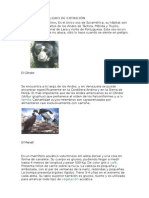 Animales en Peligro de Extinción...