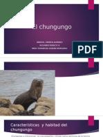 Los Chungungosa