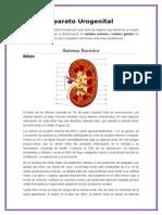 Aparato Urogenital.docx