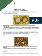 Produtos Das Abelhas II (Geleia Real) _ Brasil Acadêmico