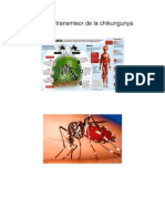 Mosquito Transmisor de La Chikungunya