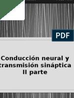 conduccion neural  y transmision sinaptica