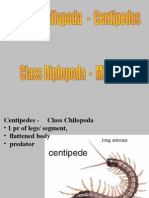 Millipedes-Centipedes.ppt