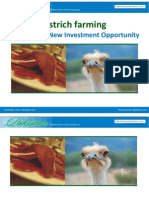 Ostrich Farming a Promising New Investment Opportunity