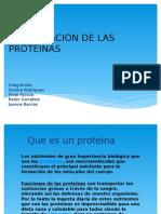 Clasificacion de Las Proteinas - Copia